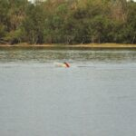 Lake Cargelligo.013 -14h52m01s2019-02-02