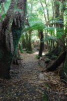 Big Tree Walk Weldborough.005 11h16m53s2019 06 04