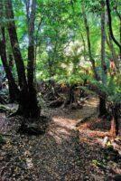 Big Tree Walk Weldborough.007hdr 11h18m12s2019 06 04