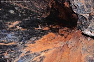 Big Tree Walk Weldborough.040hdr 12h14m24s2019 06 04