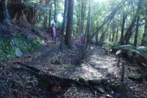 Big Tree Walk Weldborough.051 12h37m06s2019 06 04