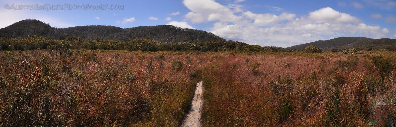 South Coast Track - the grasslands
