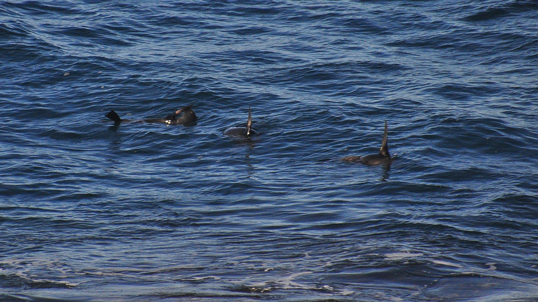 Fur Seals, City Rock 022
